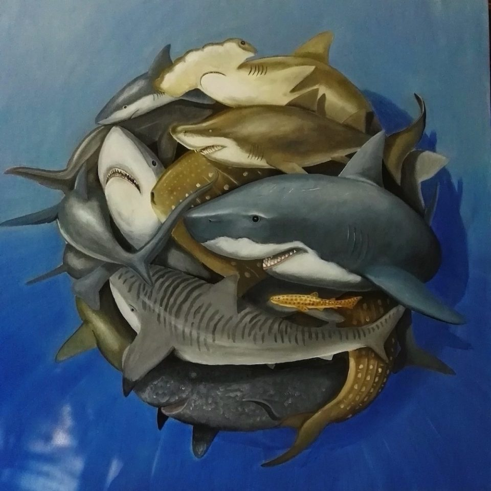 shark-stefano-gentile-art-pop-ocean